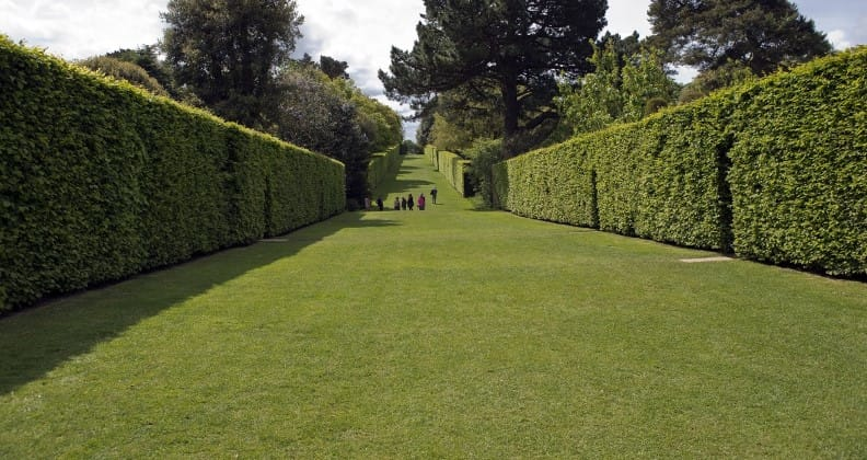 soundproof hedges