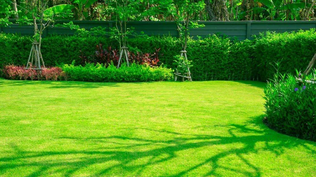 a quiet backyard
