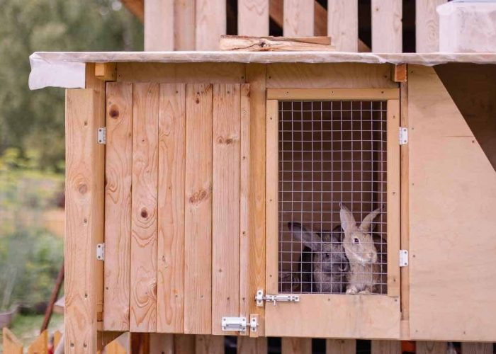 5 Ways To Soundproof A Rabbit Hutch