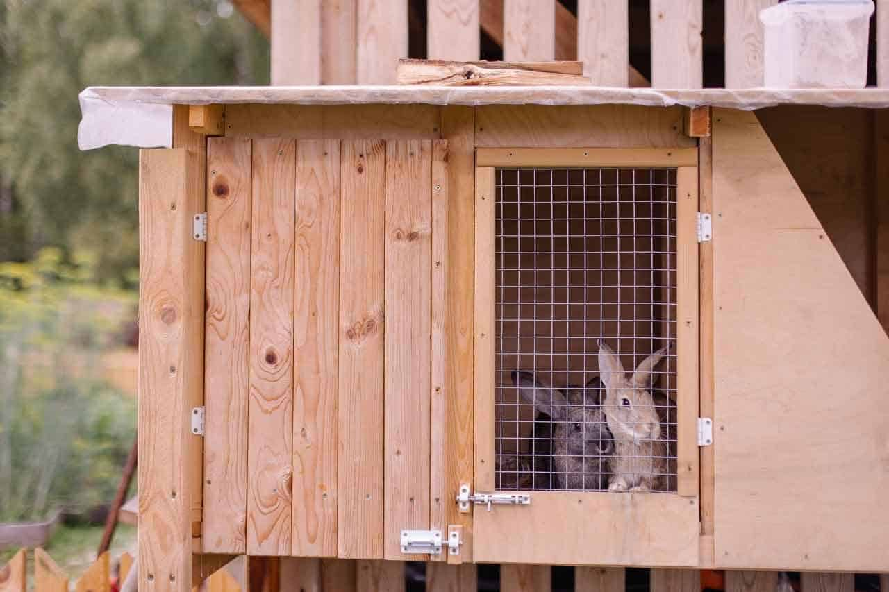 Soundproof A Rabbit Hutch